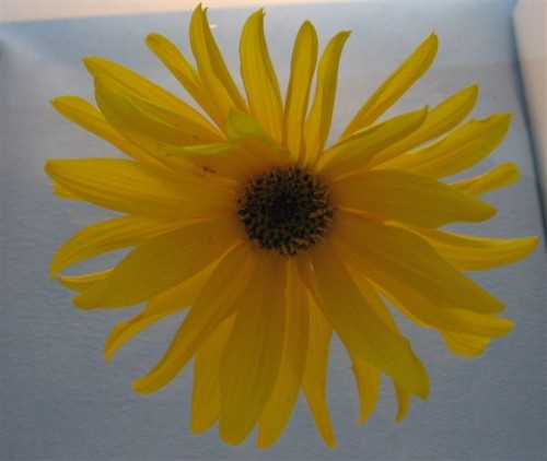 Lightbox flower_2